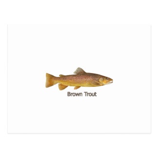 Brown Trout (titled) Post Card