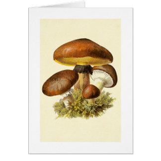 Brown Vintage Mushroom Card