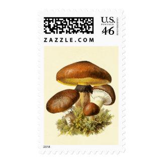 Brown Vintage Mushroom Postage Stamps