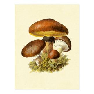 Brown Vintage Mushroom Postcards