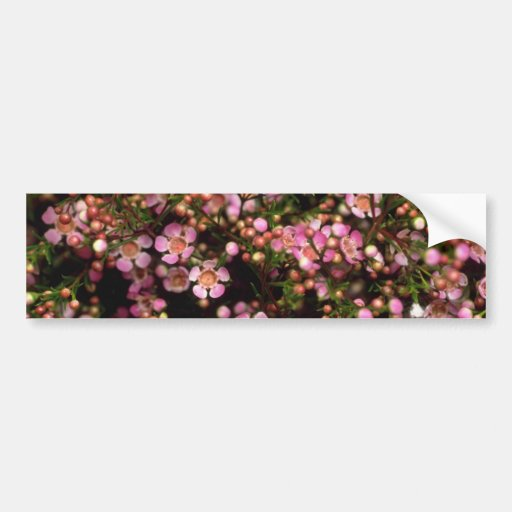 Brown Wax flower flowers Car Bumper Sticker