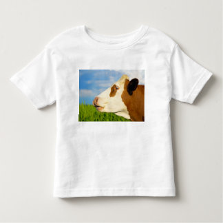 Brown white cow looking straight ahead. toddler t-shirt