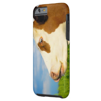 Brown white cow looking straight ahead tough iPhone 6 case