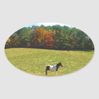 Brown & White horse,autumn trees,blue sky Oval Sticker