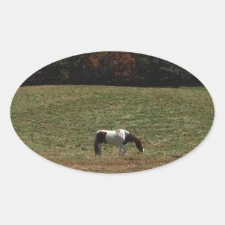 Brown & White horse Oval Sticker