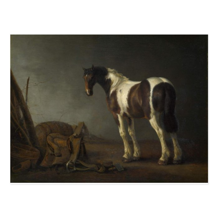 Brown & White Horse Postcard
