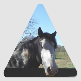 Brown &White, Painted Horse, bright blue sky Triangle Sticker