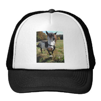 Brown &White, Painted Horse, Queen Ann Lace flower Trucker Hat