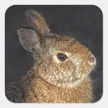 Brown Wild Bunny Rabbit in Sunlight Square Sticker