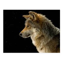 Brown wolf - head wolf - wild animal postcard