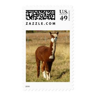 Brown y alpaca blanca timbres postales