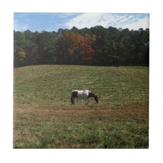 Brown y caballo blanco tejas  cerámicas