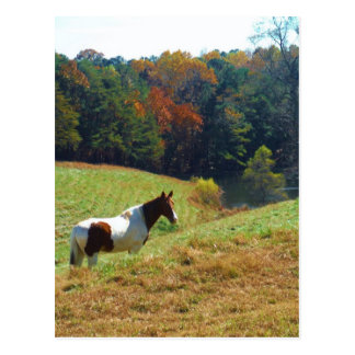 Brown y caballo blanco por los árboles del otoño tarjeta postal