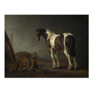 Brown y caballo blanco postal