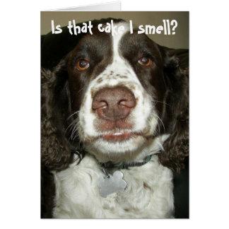 Brown y cumpleaños blanco de la foto del perro de tarjeta de felicitación