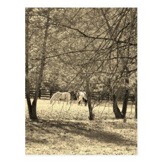 Brown y Horsess blanco en árbol. Tono de la sepia Postales