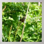 Brown y libélula azul en la caña poster