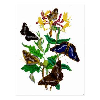 Brown y madreselva azul del mariposa y roja tarjetas postales