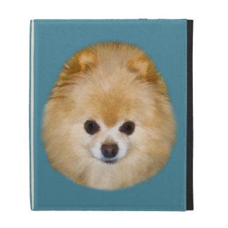 Brown y perro blanco de Pomeranian
