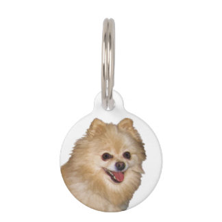 Brown y perro blanco de Pomeranian Identificador Para Mascota