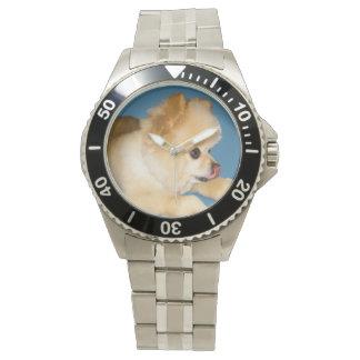 Brown y perro blanco de Pomeranian Relojes De Mano