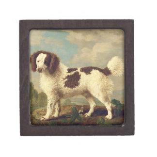 Brown y perro de aguas blanco de Norfolk o de agua Cajas De Recuerdo De Calidad