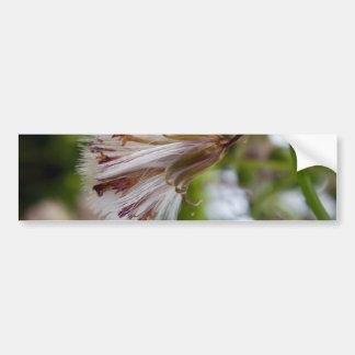 Brown y Seedpod blanco Pegatina Para Auto