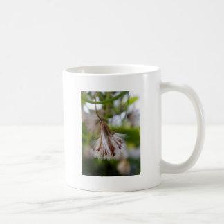 Brown y Seedpod blanco Taza Básica Blanca