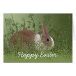 Brown y tarjeta de pascua blanca del conejo