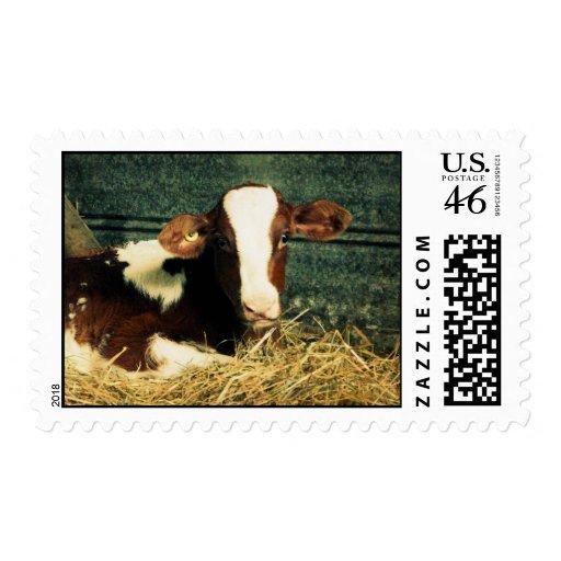 Brown y vaca de leche blanca sellos