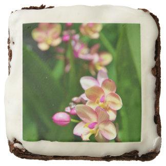 Brownie del Orchidaceae