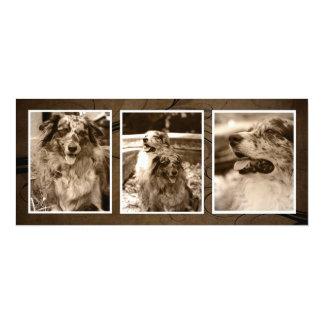 Browntone Christmas Pets Triple Photo Cards