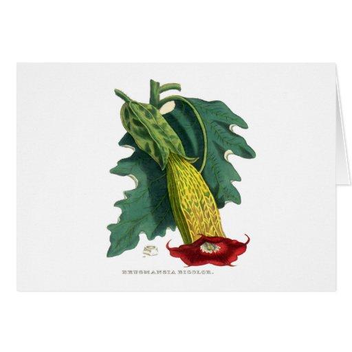Brugmansia bicolor tarjeta de felicitación