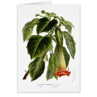 Brugmansia sanguinea (Angel's trumpet) Card