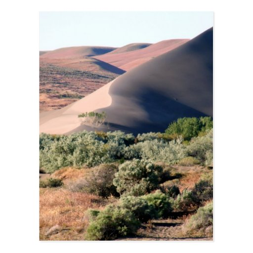Bruneau Dunes Point Postcard