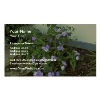 Brunfelsia Pauciflora Eximia Yesterday Today T Business Cards