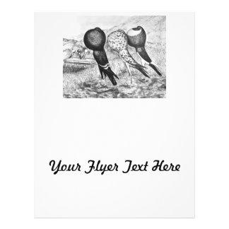 Brunner Pouter Pigeons Flyer