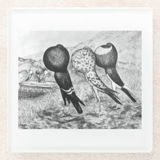 Brunner Pouter Pigeons Glass Coaster