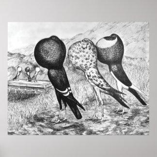 Brunner Pouter Pigeons Poster