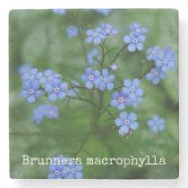 Brunnera macrophylla stone coaster