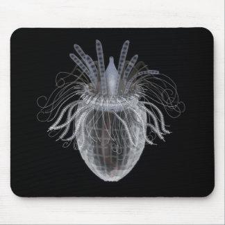Brush Head Organism Mouse Pad