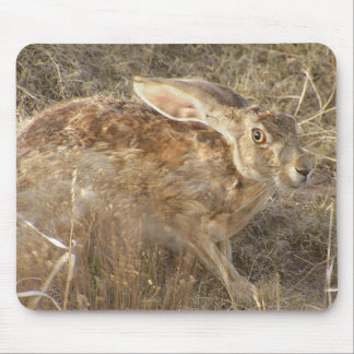 Brush Whirlpool And Jackrabbit Mouse Pad