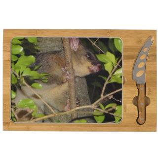 Brushtail Possum Cheese Board
