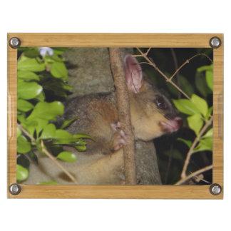 Brushtail Possum Cheese Platter