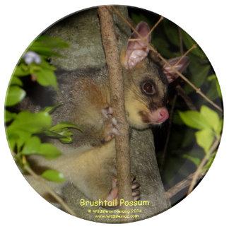 Brushtail Possum Plate