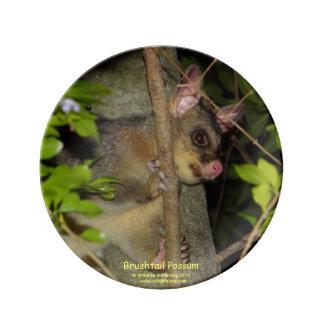 Brushtail Possum Porcelain Plate