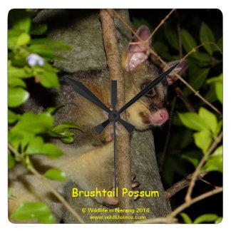 Brushtail Possum Square Wall Clock