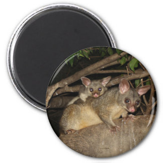 Brushtail Possums 2 Inch Round Magnet