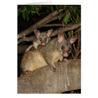 Brushtail Possums Card