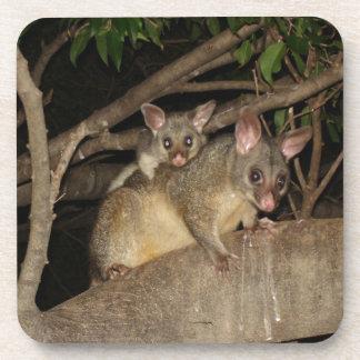 Brushtail Possums Coaster